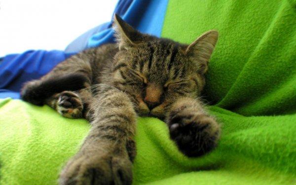 Гуманно ли усыплять домашних животных?