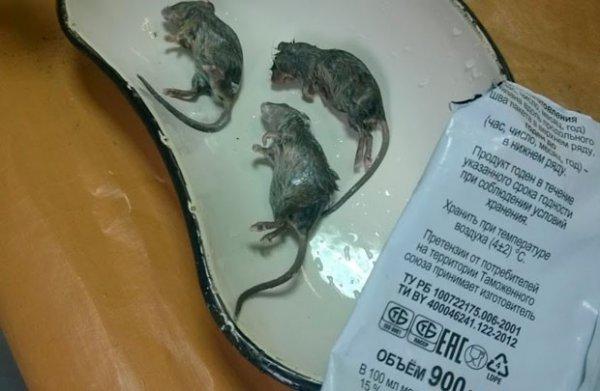 Рогачёвский МКК проиграл суд женщине, которая нашла в молоке мышей