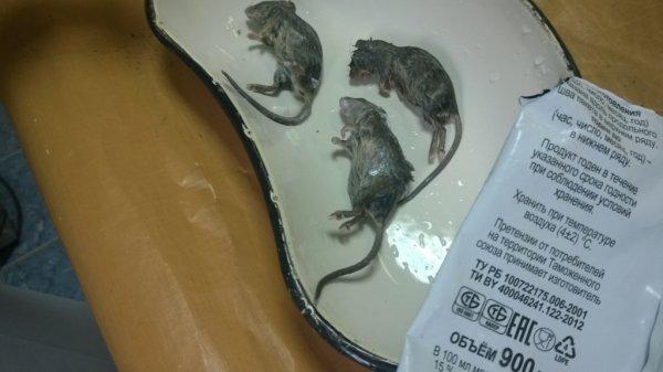 Суд отклонил жалобу Рогачевского МКК на решение по «крысиному делу»