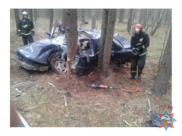 В Рогачевском районе BMW вылетел в кювет и столкнулся с деревом