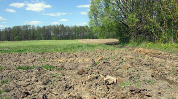 «Предположительно, брат убил брата из-за немецкой денежной компенсации». В Рогачевском районе нашли мешок костей и проломленный череп