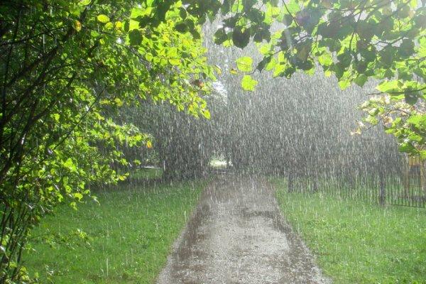 Кратковременные дожди ожидаются 17 июля в Беларуси