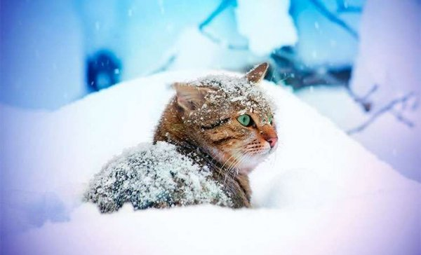 Мороз усилится. Погода в Рогачёве на выходные