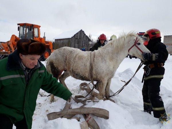 Фотофакт: под Рогачевом спасли провалившуюся в канализационный колодец лошадь
