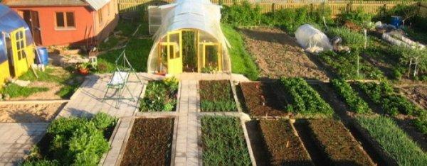 Белорусы предпочитают проводить выходные дни на дачах и огородах