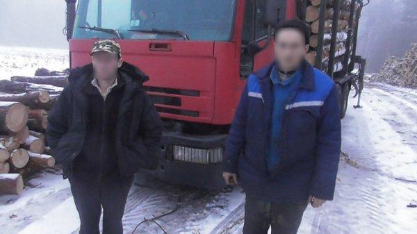 Злоумышленники с помощью подставного лесничего пытались похитить древесину из Рогачевского лесхоза