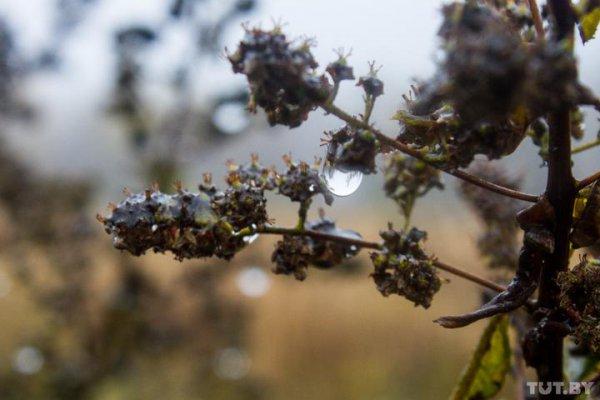 Погода в Рогачеве на выходные: похолодает, но не намного
