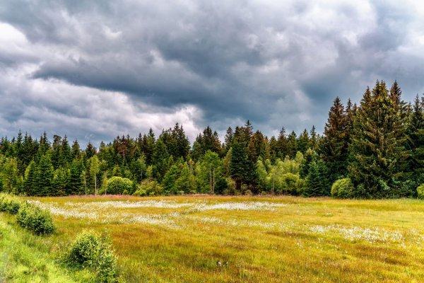 Рогачевские леса останутся без елей - климатологи