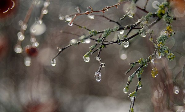 На календаре — последняя неделя января, а за окном — весна. Погода в Рогачеве на неделю