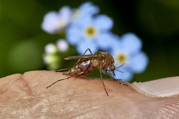 Эксперт рассказал, почему этим летом не будет комаров. И почему это плохо