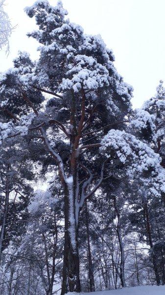 Фантастические фото короткой рогачевской зимы от Ирины Жордочкиной