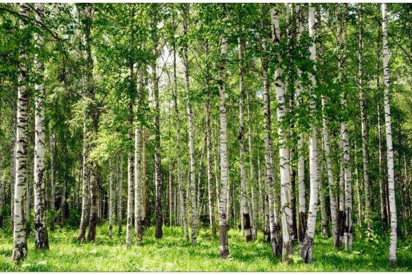 Рогачёвский блогер Валерий Новичков рассказал интересные факты про лес