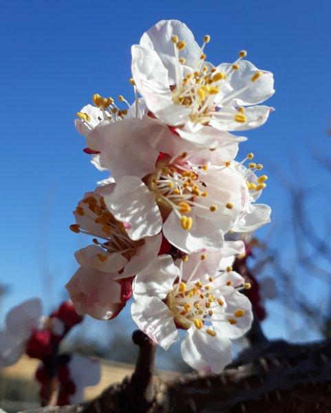 Весна на Рогачёвщине: потрясающие фото от Ирины Жордочкиной