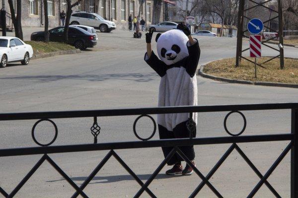 В Минске задержан человек в костюме панды