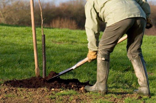 Полезные советы, что нужно знать при выращивании саженцев