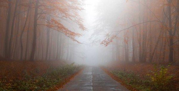 Пасмурно и туманно. Погода в Рогачеве на выходные