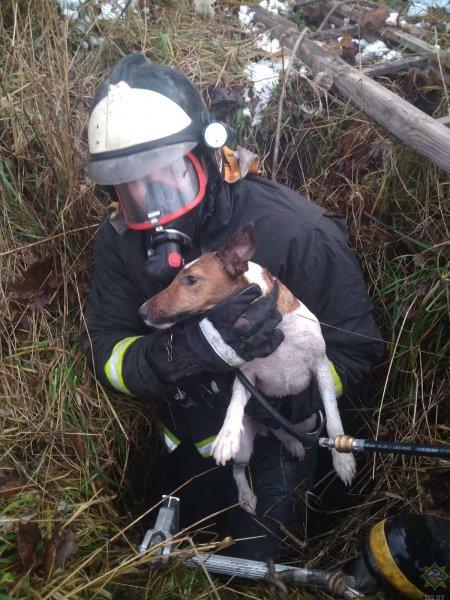 В Рогачевском районе собака провалилась в заброшенный колодец, выручали спасатели