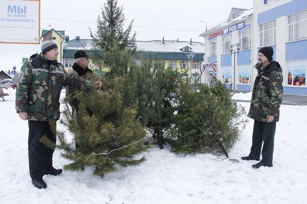 Стало известно, где, когда и по чём можно купить новогодние ели в Рогачёве