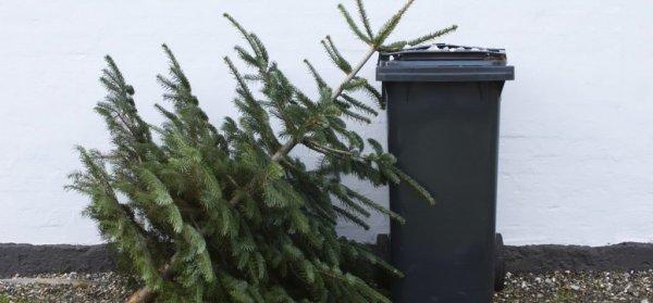 Эзотерики рекомендуют убирать новогоднюю ёлку до Крещения