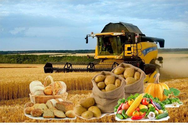 Эксперты рассказали о причинах кризиса белорусского сельского хозяйства