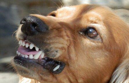 В Подмосковье во время игры собаки задушили 11-летнюю девочку