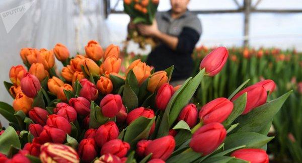 В России хотят запретить продажу белорусских цветов