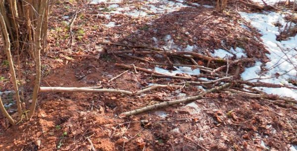 В Витебске житель Рогачева вместе с подельником до смерти избил мужчину и закопал тело в лесу