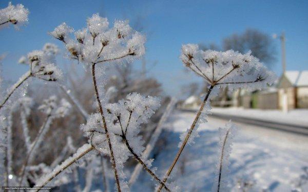 Зима не отступает. На выходных в Рогачёве сохранится зимний характер погоды