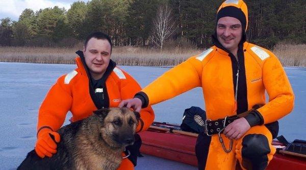 В Полоцке сотрудники МЧС спасли овчарку, провалившуюся под лед