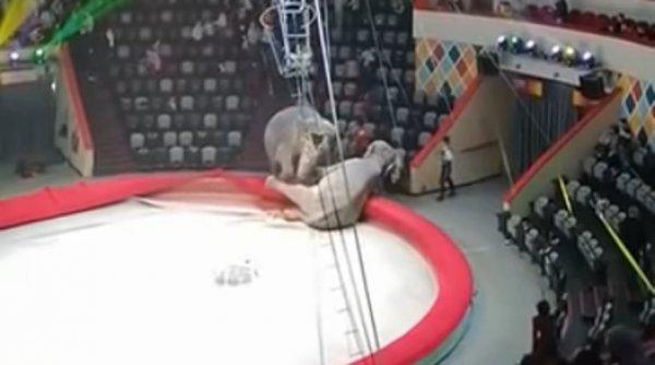В Казанском цирке во время представления два слона устроили жесткую драку