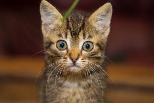 Кот спас годовалого ребёнка, найденную у тела умершей матери