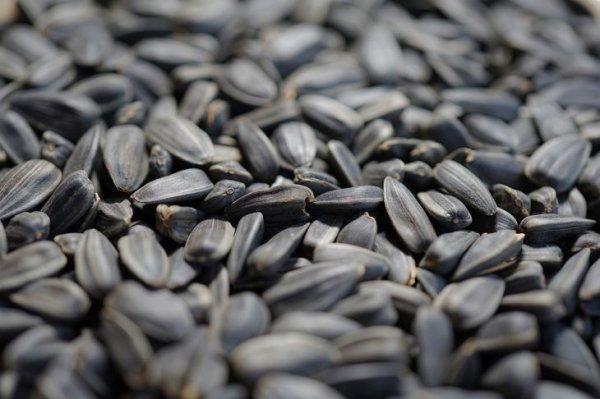 Медики рассказали, что произойдет с организмом, если каждый день есть семечки