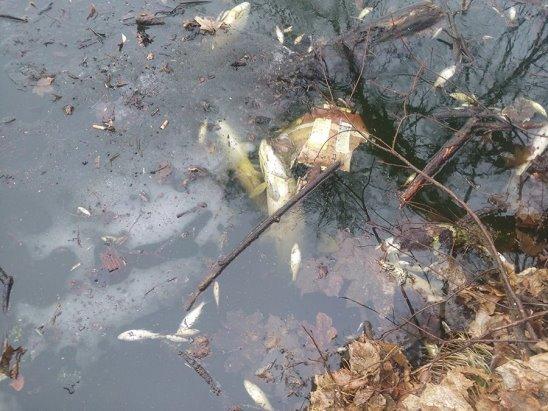 Видеофакт: Экологическая катастрофа в Поболово, Сельсовет бездействует