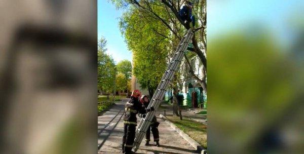 В Гомеле 12-летняя девочка забралась на дерево за мячом и не могла спуститься