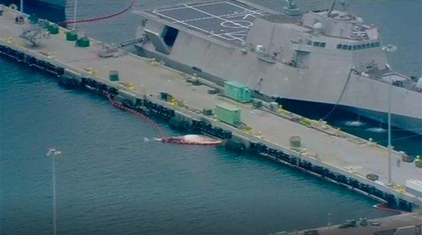 В Калифорнии под винтом эсминца погибли два редких кита