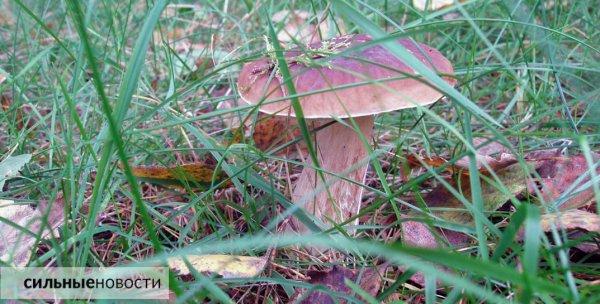 В Рогачёве зарегистрированы первые случаи отравления грибами