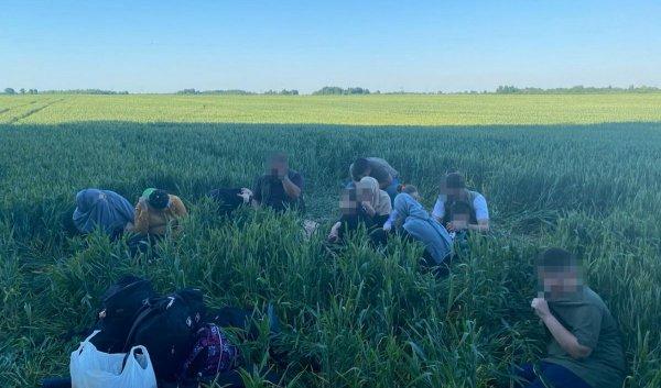 Литовские пограничники на границе с Беларусью снова задержали нелегальных  мигрантов