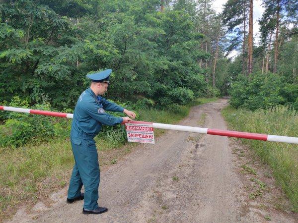 В Рогачёвском районе ввели запрет на посещение леса