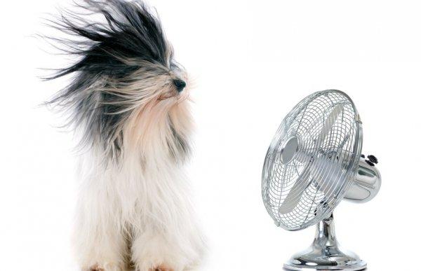 Названы пять элементарных способов охладить квартиру без кондиционера