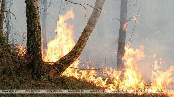 В Чечерском районе ликвидируют крупный лесной пожар