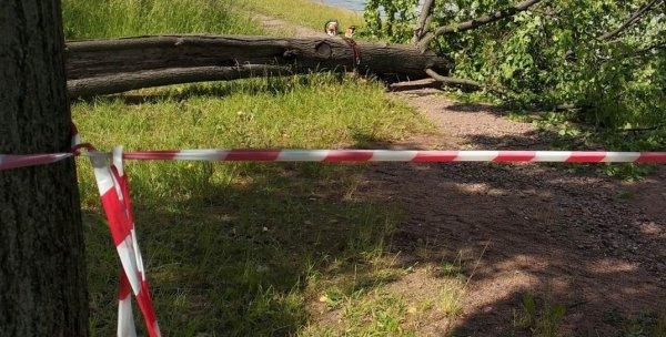 В Минской области во время шквалистого ветра погибла женщина