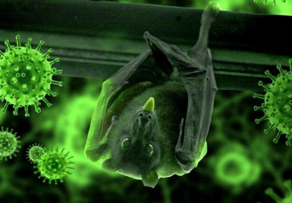 У летучих мышей в Индии выявили новый смертельно опасный вирус