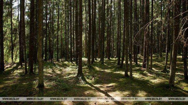 Сегодня в Рогачёвском районе могут снять запрет на посещение лесов