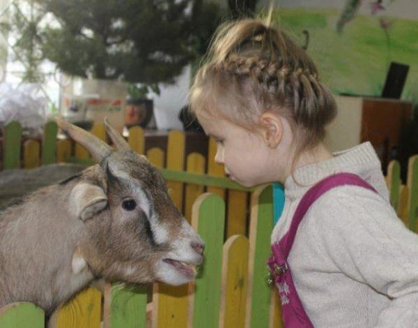 29 июня в Рогачёв приезжает Mini зоопарк  «Зверополис»