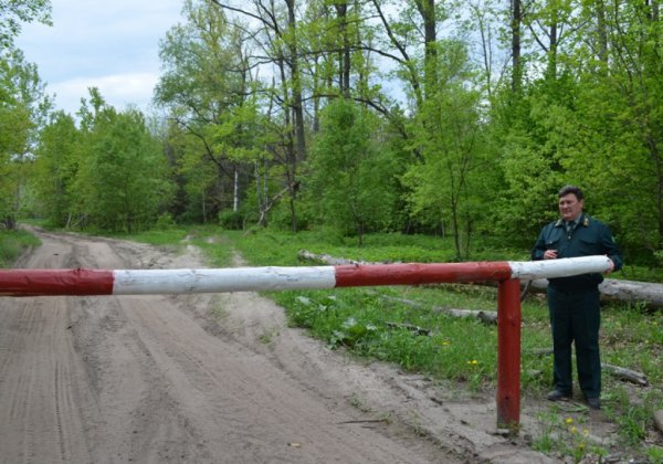 В Беларуси по всей территории снят запрет на посещение лесов