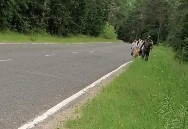 В Лепельском районе в лесу заблудилась семья из пяти человек