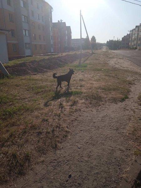 В Рогачёве бездомные собаки атакуют детские площадки. КЖЭУП не реагирует на проблему