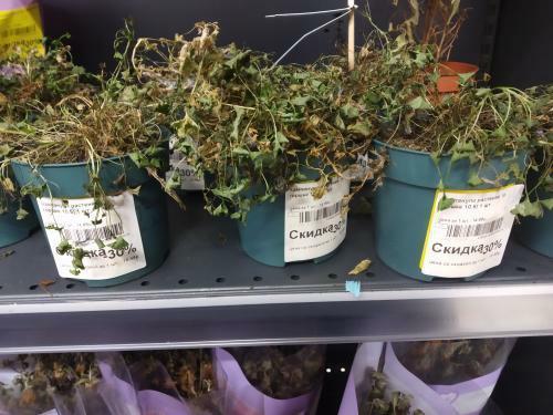 Фотофакт: Посмотрите какие цветы продают в Рогачёвском Евроопте