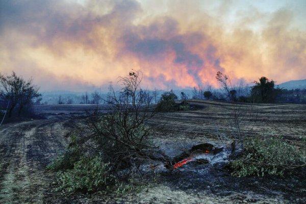 В Турции задержали подозреваемого в поджоге лесов