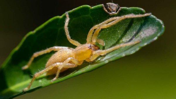 Гомельскую область атакуют ядовитые пауки